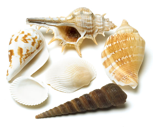 Do it yourself shell art hot glue the shells to the frame and voila you have art i made a total of 4 and placed 2 over each nightstand total cost less than 20 each solutioingenieria Images
